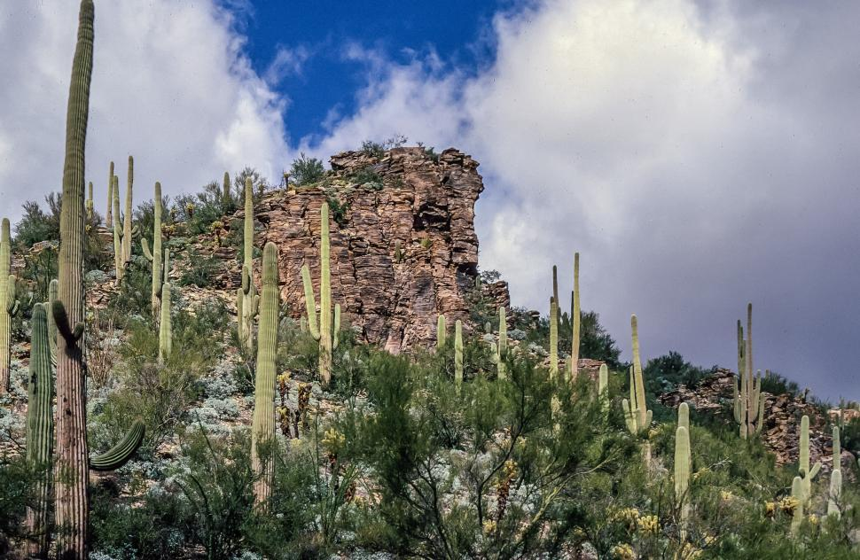 Download Free Stock HD Photo of Saguaro Cactus on mountain Online