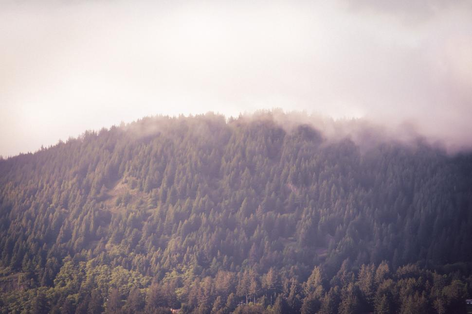 Download Free Stock HD Photo of Trees on a foggy mountain in Oregon Online