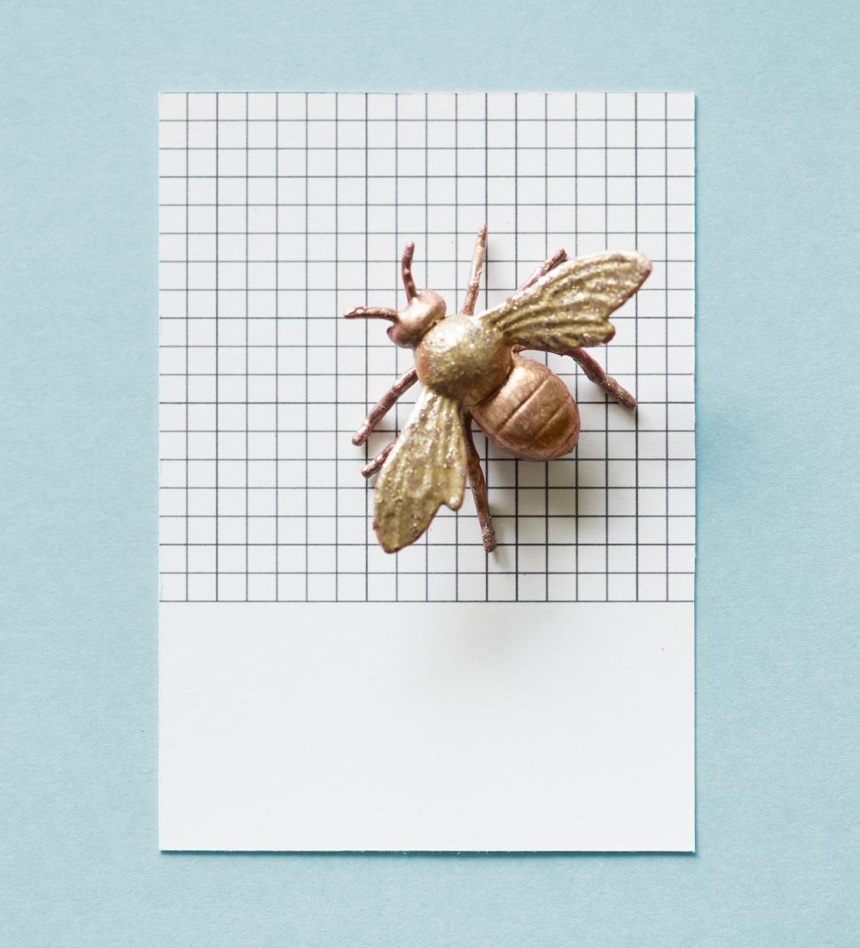 Download Free Stock HD Photo of Flay lay of a miniature glittery toy fly on a spaced cardboard frame Online