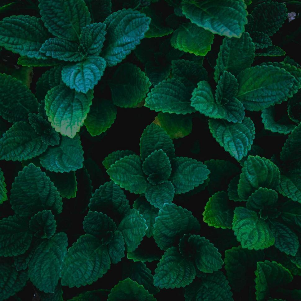 Download Free Stock HD Photo of Dark green  leafs  Online