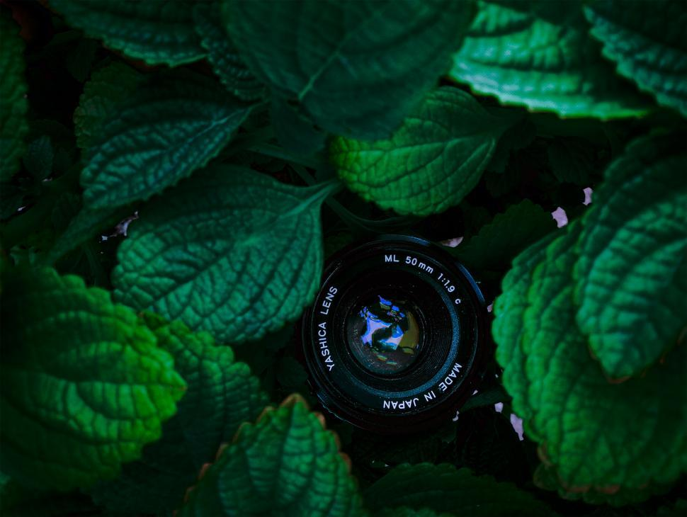 Download Free Stock HD Photo of lens within the leafs  Online