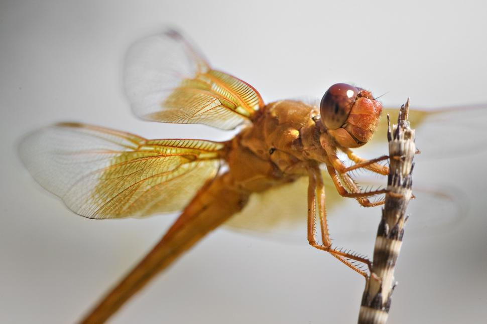 Download Free Stock HD Photo of orange dragonfly perched on reed Online