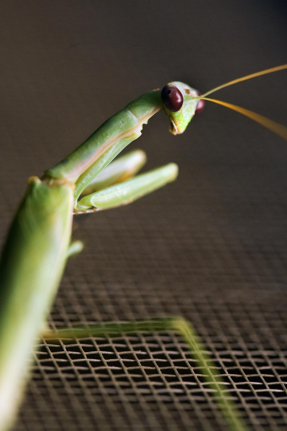 Download Free Stock HD Photo of mantis sits on window screen Online