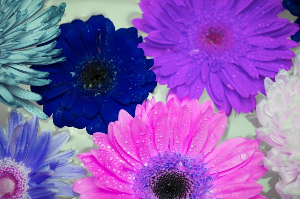 Download Free Stock HD Photo of Close up of Daisy flowers Online