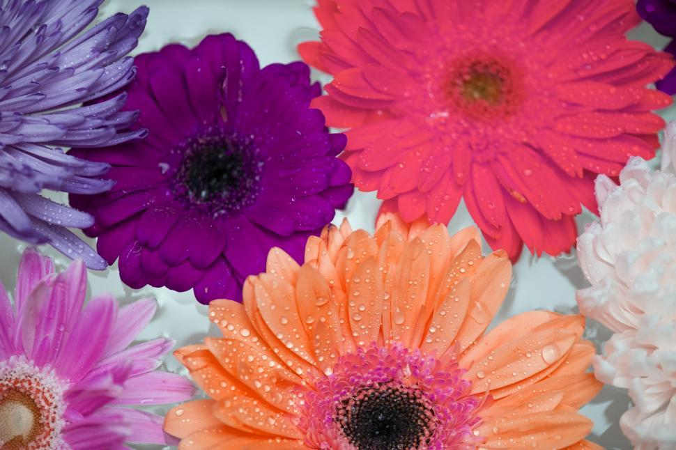 Download Free Stock HD Photo of Close up of daisy and chrysanthemum flowers Online