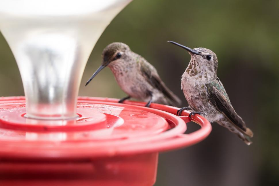 Download Free Stock HD Photo of Two Hummingbirds on a Feeder Online