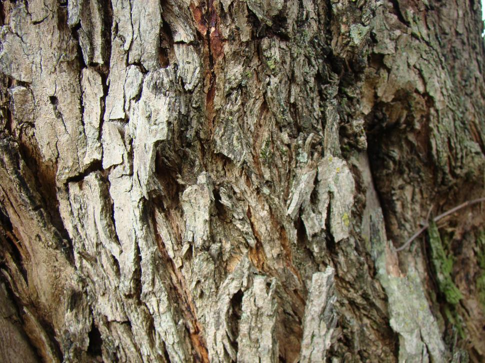 Download Free Stock HD Photo of Bark of tree texture Online