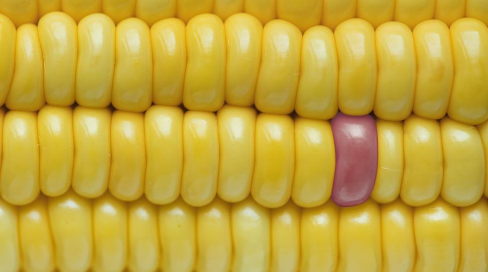 Download Free Stock HD Photo of Close up of corn on the cob Online