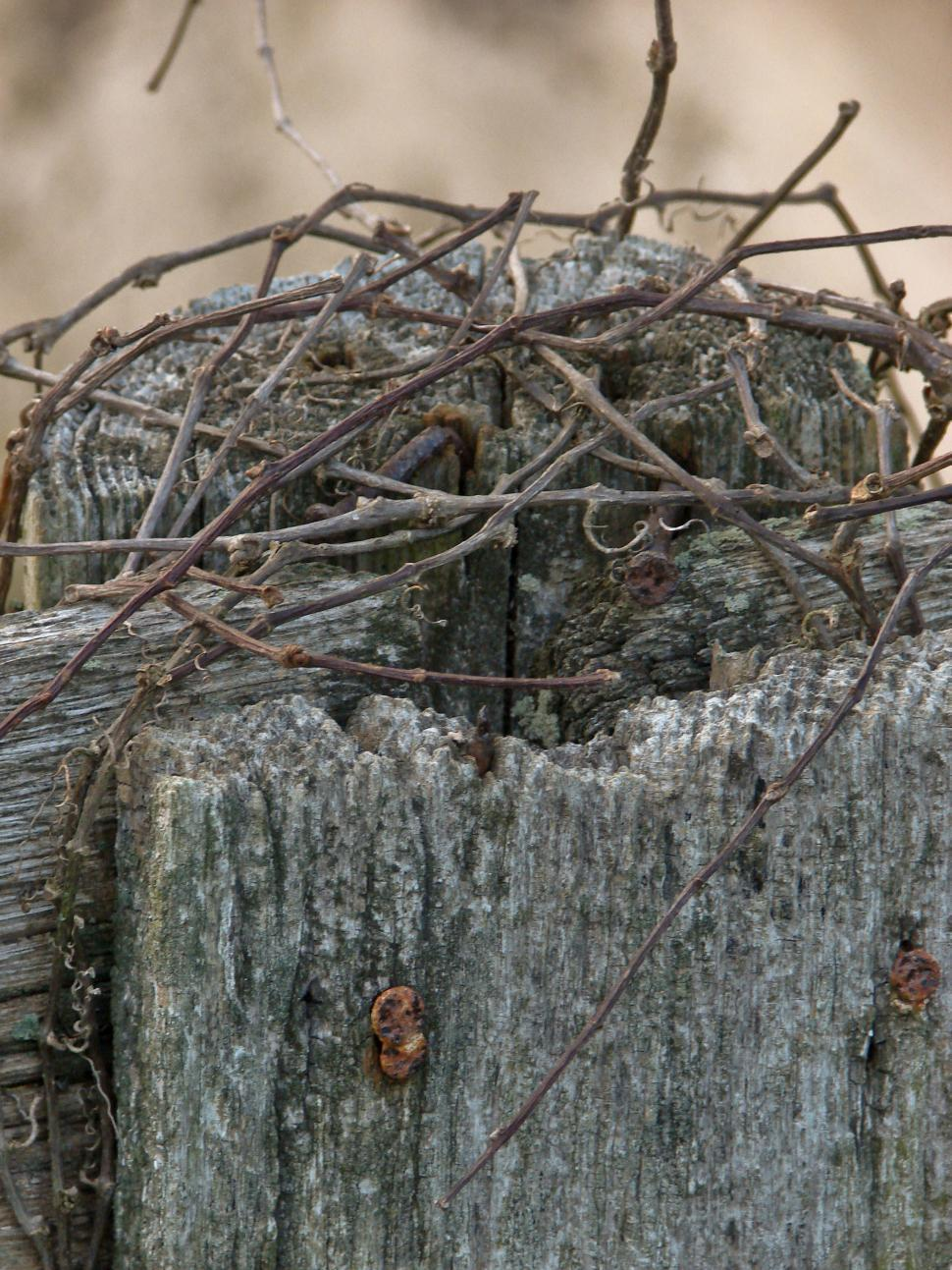 Download Free Stock HD Photo of Fency, vine, nailFence, Nails, Vine 2009 - YS, OH Online