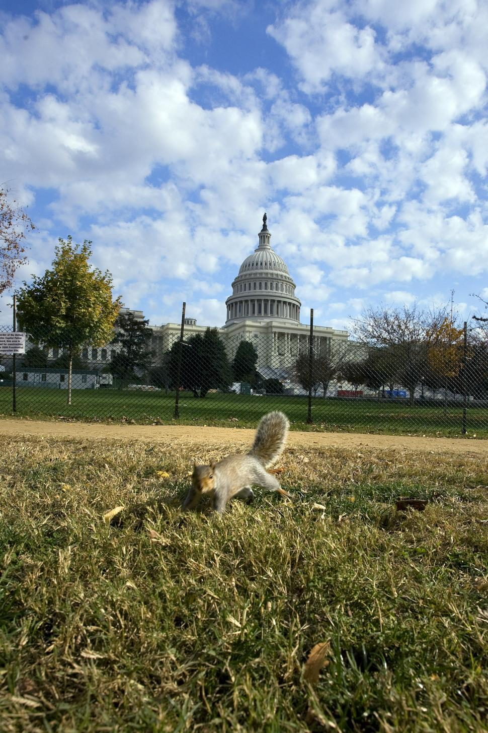 Download Free Stock HD Photo of Squirrel at US Capitol Online