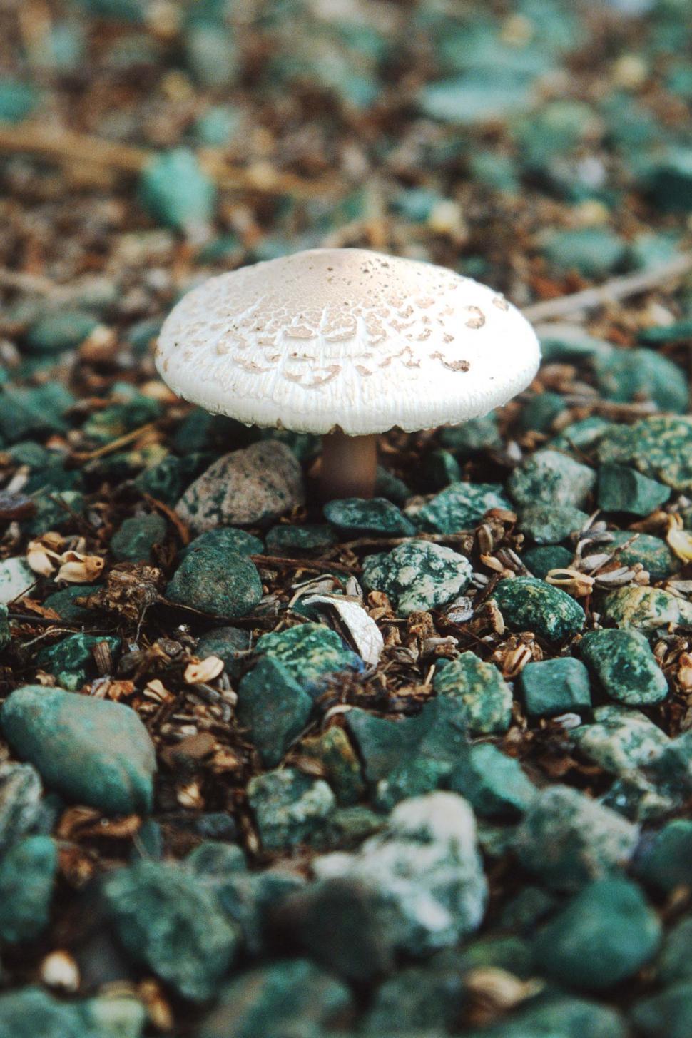 Download Free Stock HD Photo of Mushroom in green gravel Online