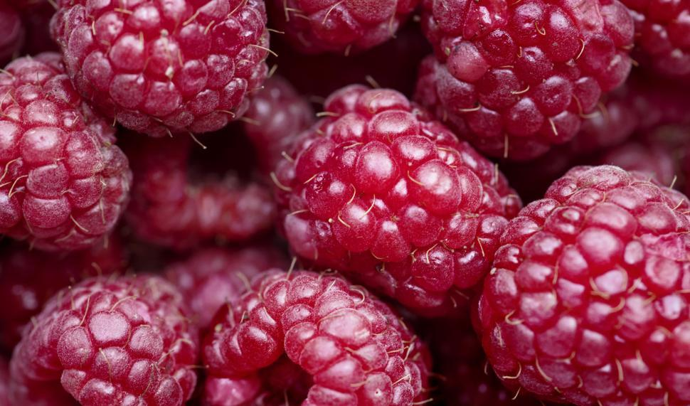 Download Free Stock HD Photo of Close up of raspberries Online