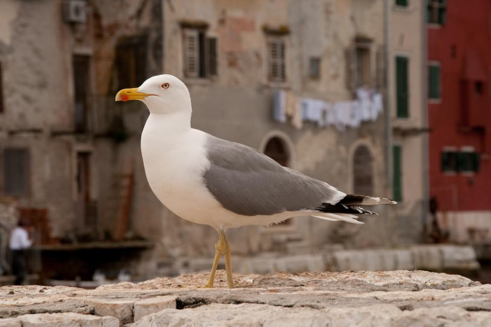 Download Free Stock HD Photo of Seagull Online