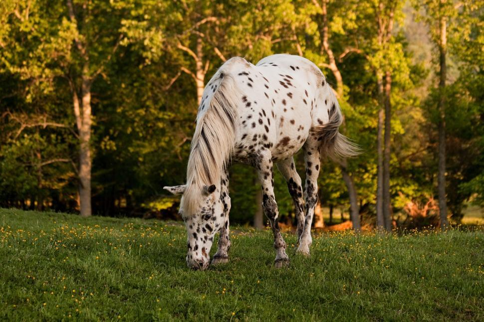 Download Free Stock HD Photo of Horse grazing Online