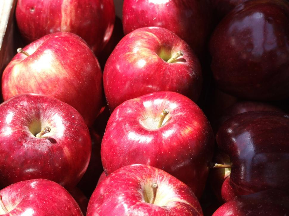 Download Free Stock HD Photo of Red Apples Online