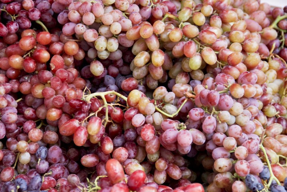 Download Free Stock HD Photo of Grapes Online