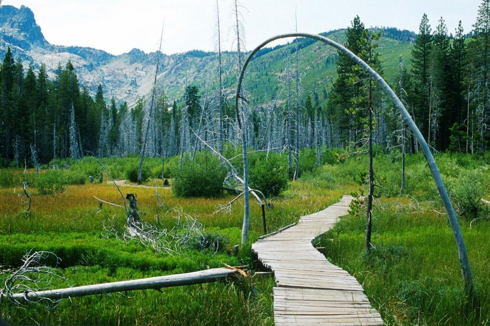 Free image of Marshy area with suspended wooden boardwalk.