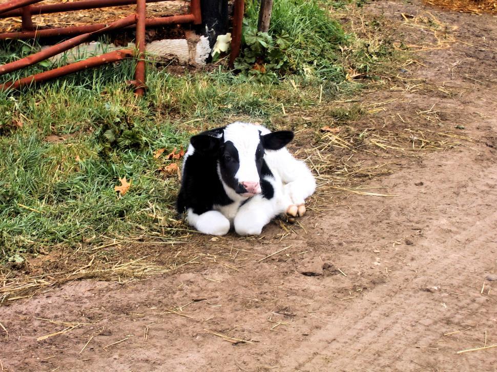 Download Free Stock HD Photo of Got Milk? Online