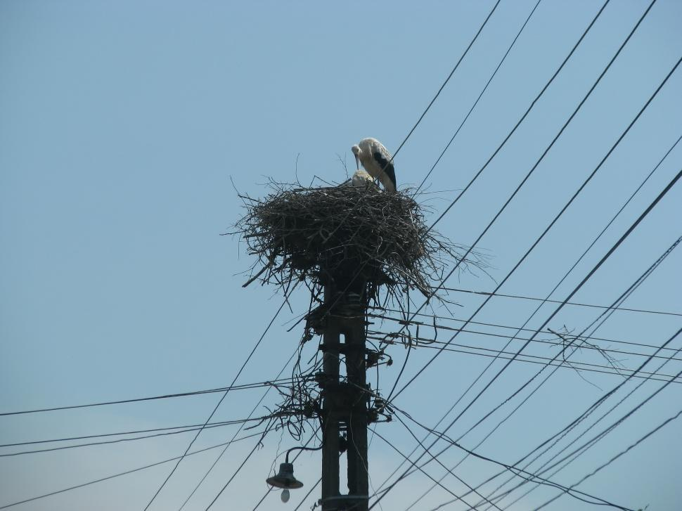 Download Free Stock HD Photo of Stork In The Nest Online