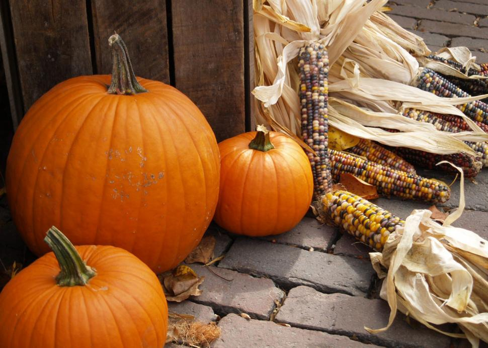 Download Free Stock HD Photo of Thanksgiving Time Online