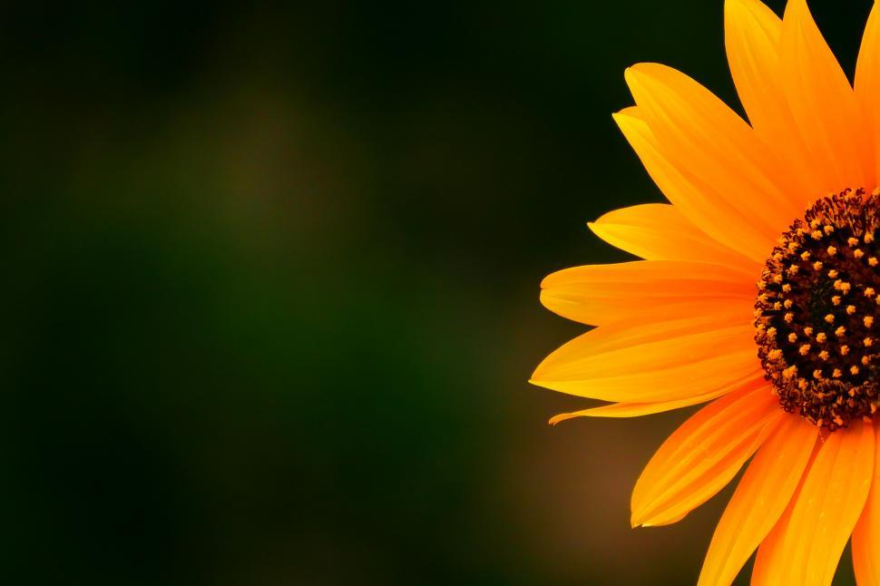 Download Free Stock HD Photo of Sunflower Yellow Flower Partial Online