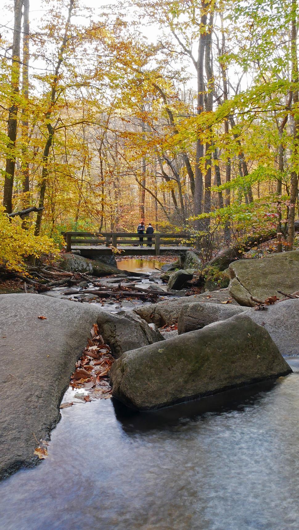 Download Free Stock HD Photo of Wooden Bridge Across A Stream Online
