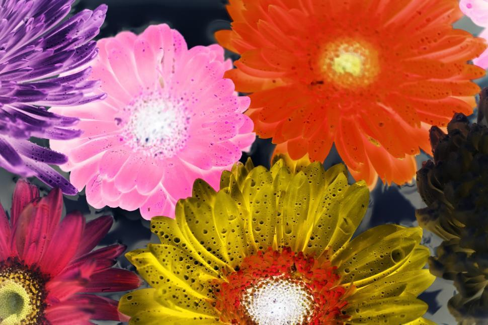 Download Free Stock HD Photo of Inverted color image of daisy and chrysanthemum flowers Online