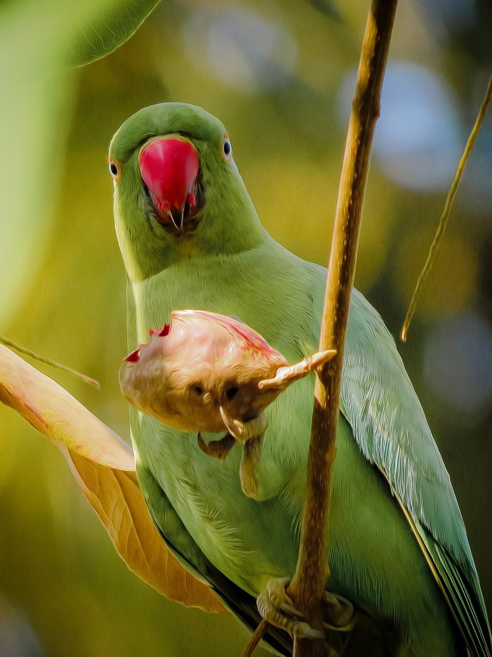 Download Free Stock HD Photo of Parrot, Rose-ringed Parakeet - Digital Art  Online