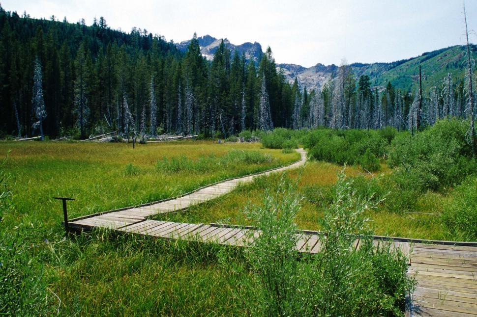 Download Free Stock HD Photo of Boardwalk through beaver wetland Online