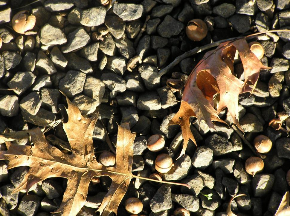 Download Free Stock HD Photo of Stones, leaves & acorns Online