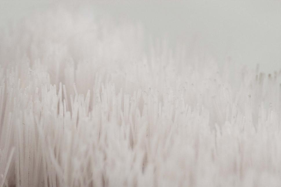 Download Free Stock HD Photo of White bristle background Online