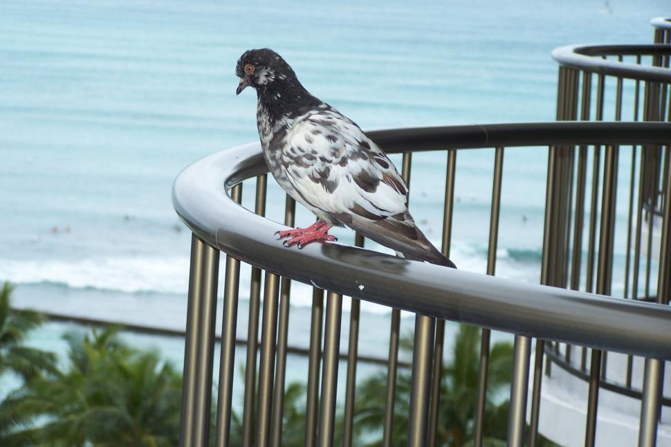 Free image of Bird on a rail