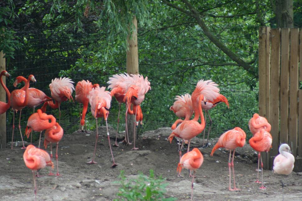 Download Free Stock HD Photo of FLAMINGO Online