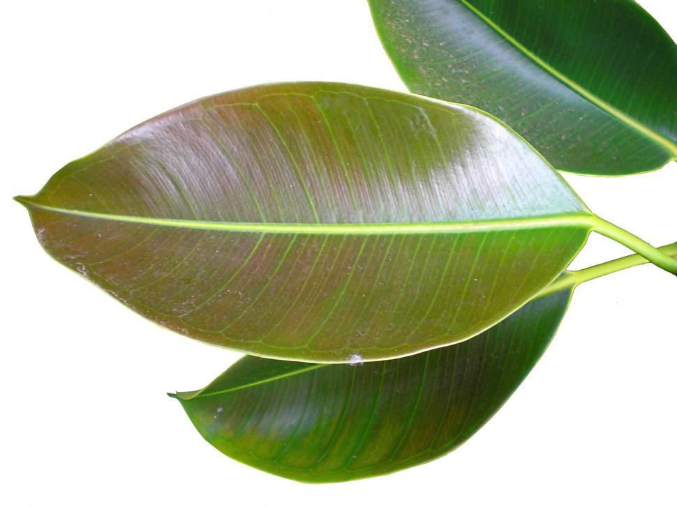 Download Free Stock HD Photo of Green Leaves Online