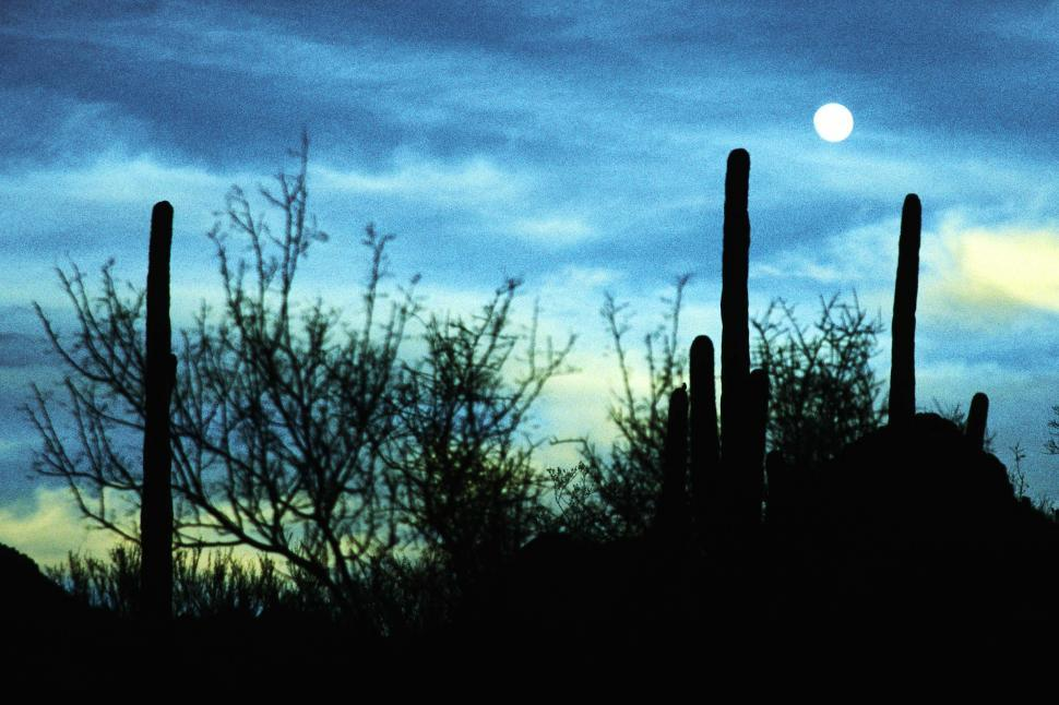 Download Free Stock HD Photo of Desert silhouettes Online