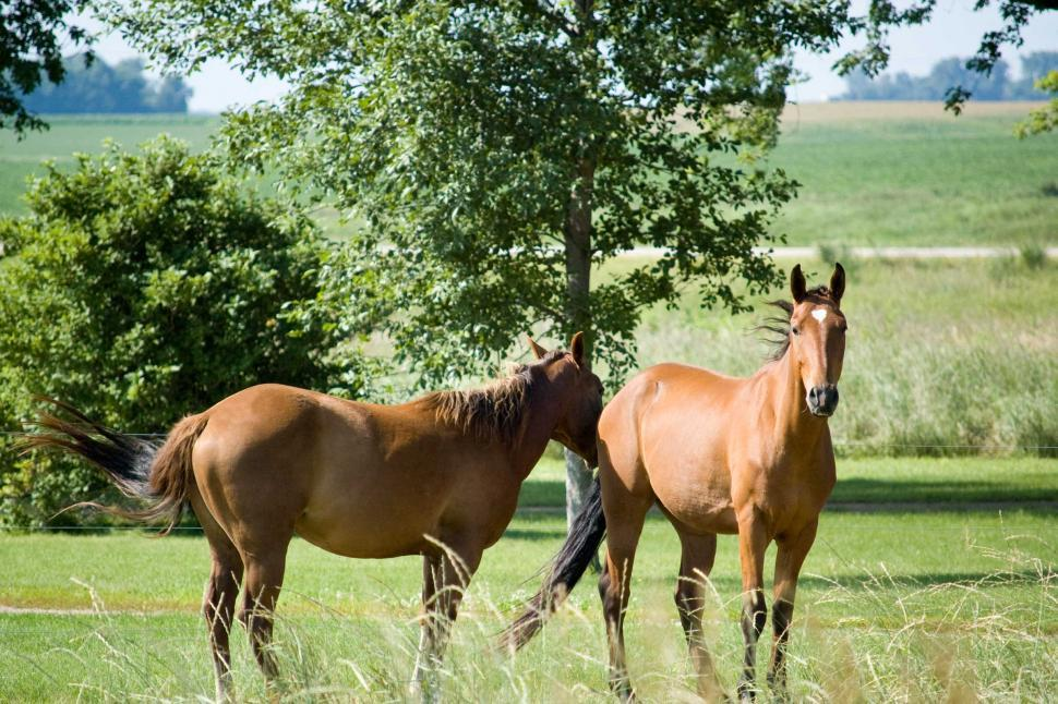 Download Free Stock HD Photo of Horses Online