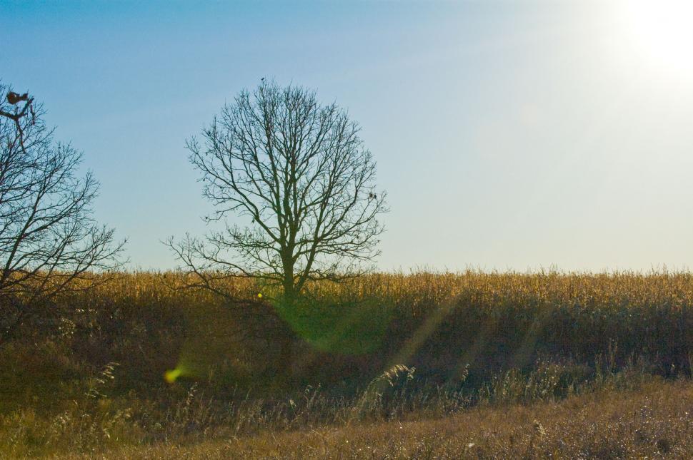 Download Free Stock HD Photo of Sun Rise & Corn Fields Online