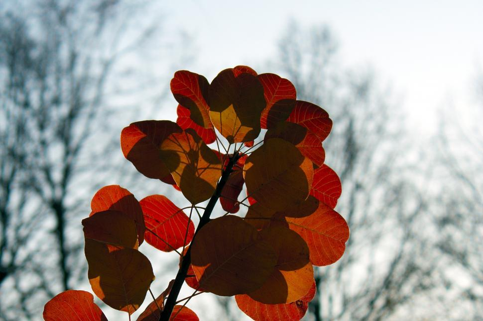 Download Free Stock HD Photo of Autumn leafs Online