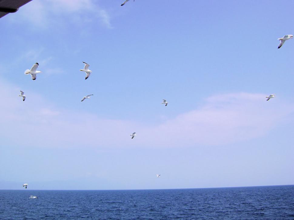 Download Free Stock HD Photo of Flying Seagulls Online