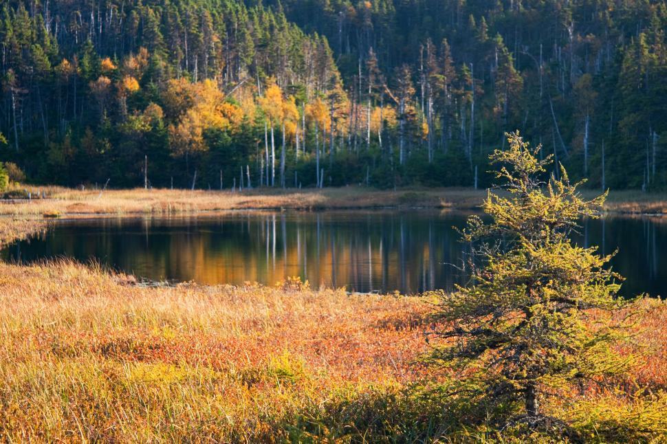 Free image of Autumn colors around the lake.