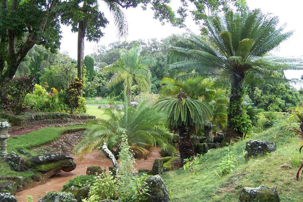Download Free Stock HD Photo of Hawaiian Garden Online