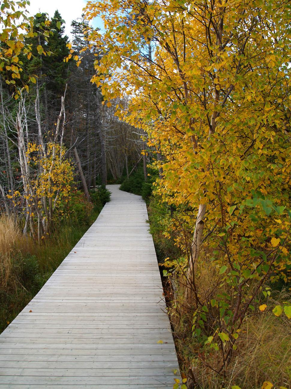 Download Free Stock HD Photo of Autumn Boardwalk Online