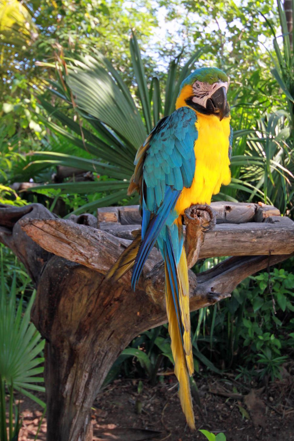 Download Free Stock HD Photo of Parrot Online