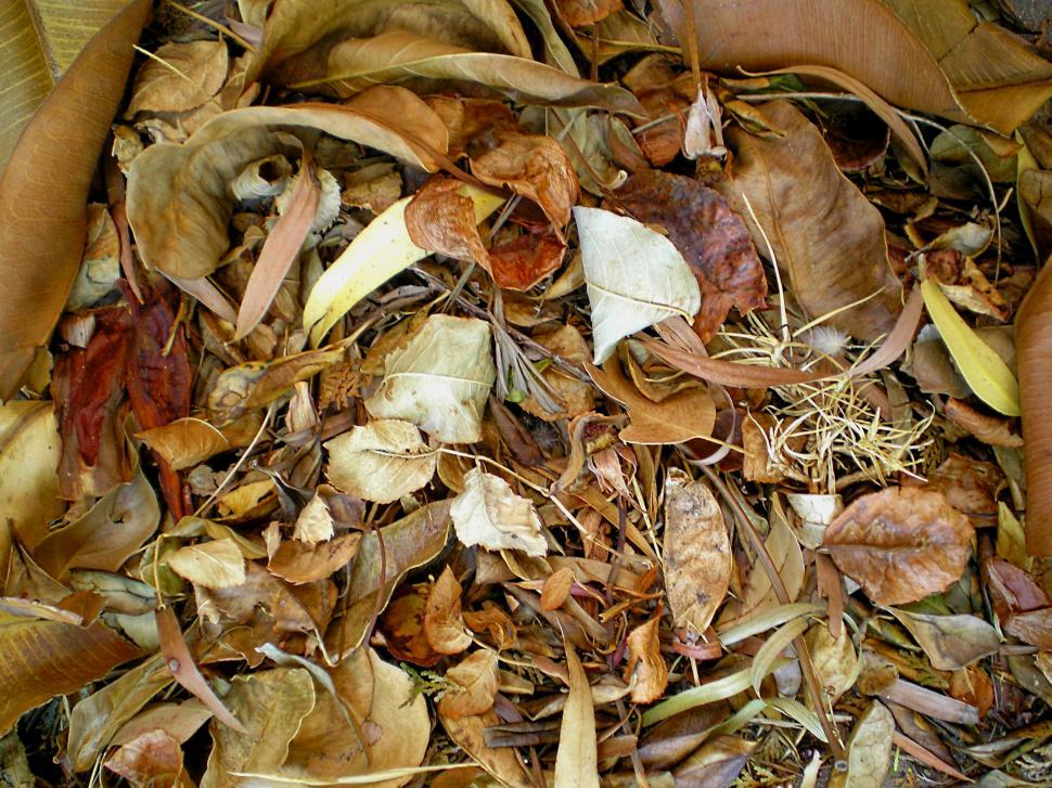 Free image of A pile of Autumn leaves.