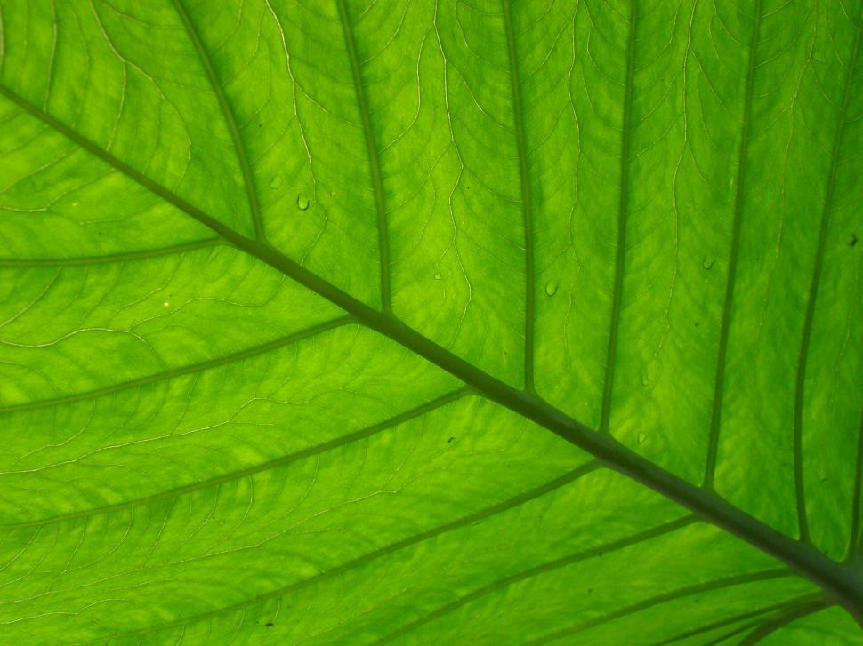 Download Free Stock HD Photo of Leaf texture Online