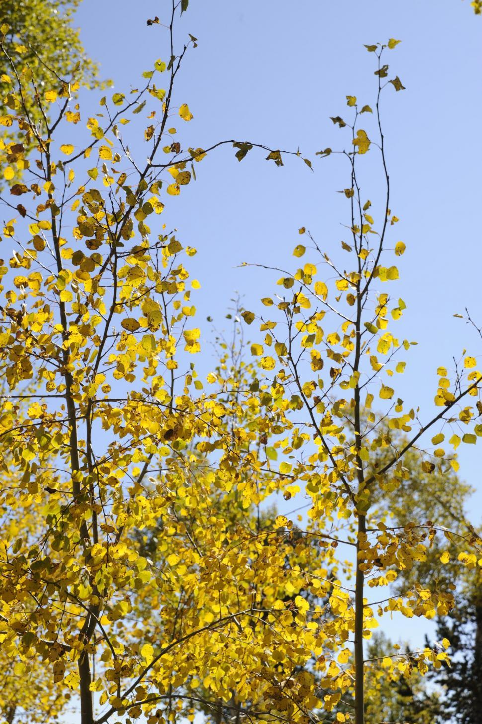 Download Free Stock HD Photo of Yellow Leaves Online