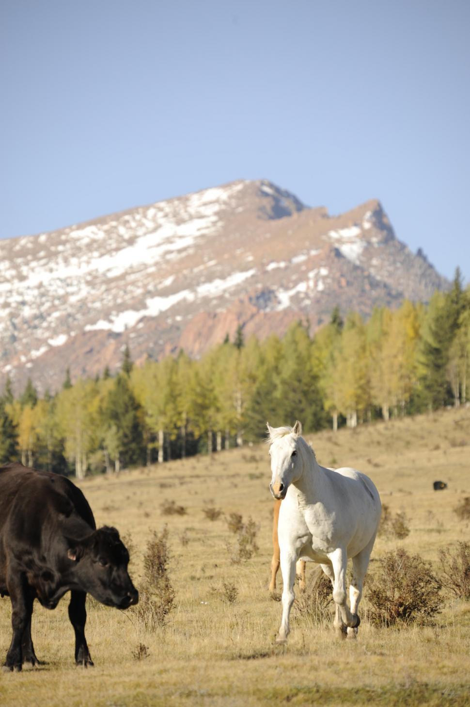 Download Free Stock HD Photo of Horse and Cow Online
