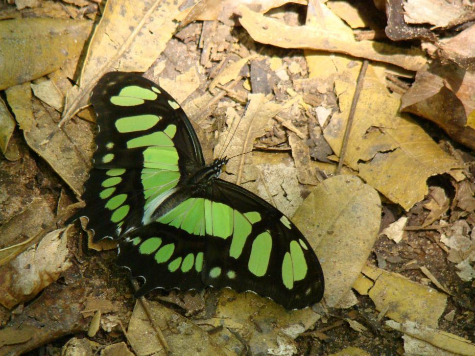 Download Free Stock HD Photo of Butterfly Online