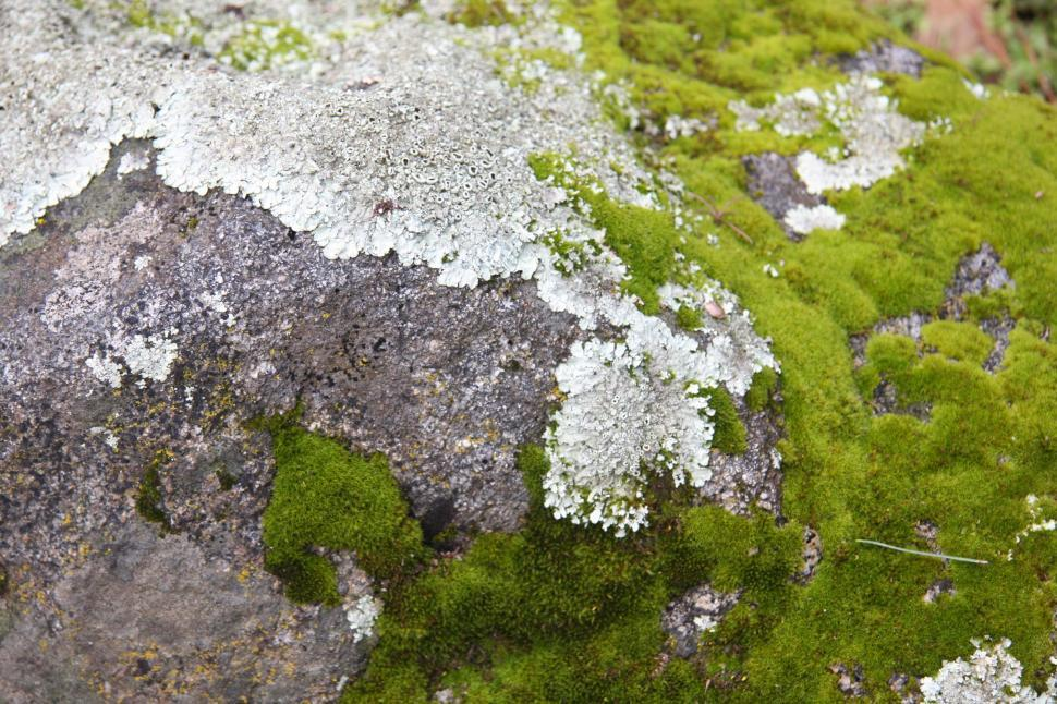 Download Free Stock HD Photo of Moss and Rock Online
