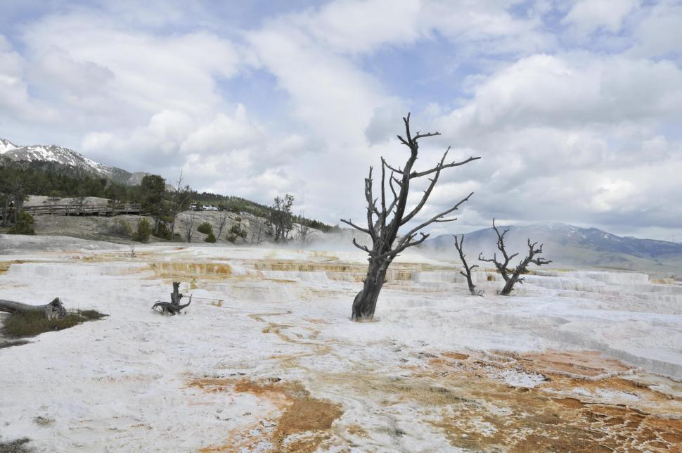 Download Free Stock HD Photo of Dead trees in Mammoth Hot Springs  Online
